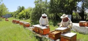 Tunceli'de Vefa Grubu arı bakımı yaptı