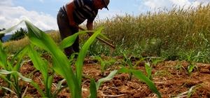 Çiftçilerden koronaya inat üretim Covid-19 salgınında üretimin aksamaması için özel izin verilen üreticiler tarlalarında bayramda da çalışmaya ve üretmeye devam ediyor