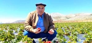 """Bayram: """"Karaman'da üretilen çileklerin aroması çok yüksek"""""""