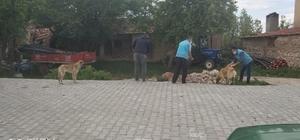 Aslanapa'da sokak hayvanları unutulmadı