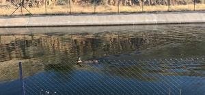 Su kanalına düşen karaca'yı jandarma kurtardı