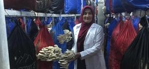 Yılda 3 ton mantar üretiyor
