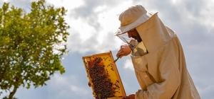 """Arılarda, zahmetli oğul toplama dönemi Bingöl'de arıların oğul verme dönemiyle, ağaçlar ve kayalıklara yerleşen yavrular, zahmetli bir şekilde yeni kovanlara alınması başladı Öğretim Görevlisi Nevzat Çağlayan: """"Şu an bulunduğumuz zaman dilimi  oğul verme zamanıdır"""" """"Oğullarla, arıcılık yapan köylüler birçok arı kolonisi sahibi oluyorlar"""""""