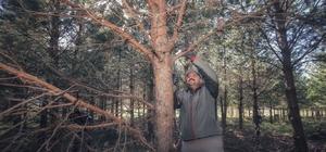 "Çevreci Başkan ağaç budadı Başkan Orhan: ""Yeşil alanlar yaşam kaynağımız"""