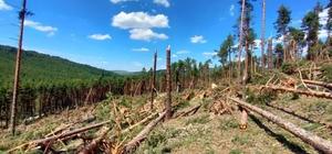 Çatacık'ta devrilen ağaçları yönelik çalışmalar başlatıldı