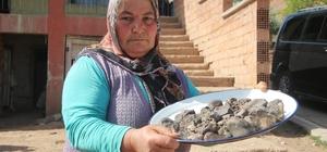 Tarlasından mıknatısla tek tek 45 adet gök taşı topladı Gök taşlarını 4 yıldır evinde saklıyor