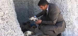 (Özel) Belediye başkanından anlamlı kampanya 'Sokak hayvanını sahiplenelim, hayvanlar sokakta kalmasın' kampanyası başladı