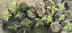 Köyceğiz'de Uyuşturucu Operasyonu: 1 Gözaltı