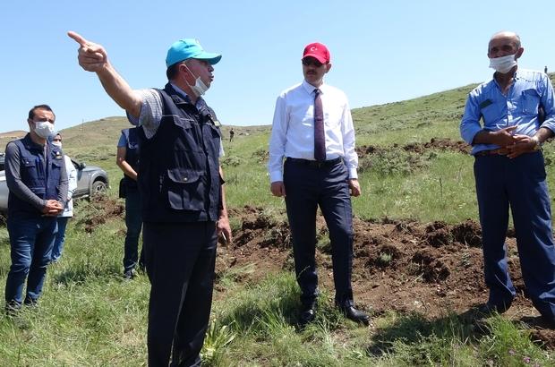 648 bin Sivaslı adına fidan dikilecek Sivas'ta Bostancık Erozyon Kontrol Projesi kapsamında bölgeye 300 bin adet fidan dikiliyor