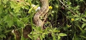 Cins cins yılanlar korku salıyor Herkes korkuyor o ise video çekiyor sohbet ediyor