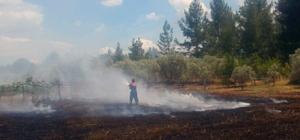 Muğla'da anız yangını