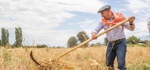 Başkan Soyer, Ödemiş ve Tire'de ilk karakılçık buğdayı hasadına katıldı