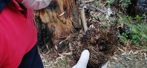Alevlerin arasında kalan kirpiyi itfaiye eri kurtardı