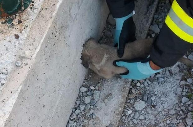 Kafası yağmur suyu giderine sıkışan yavru köpek kurtarıldı