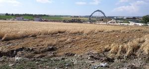 Kırklareli'de dolunun vurduğu tarlalarda inceleme yapıldı