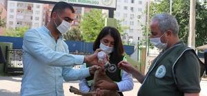 Siirt'te bitkin bir şekilde bulunan yavru dağ keçisi tedavi altına alındı