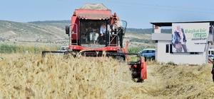 Menemen'de hasat bayramı Başkan Soyer, elleriyle serptiği karakılçık buğdayının hasadını yaptı