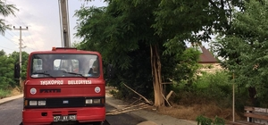 Yalova'da ağaca yıldırım düştü