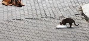 Hareketsiz yatan kediyi, başka kedi patileriyle ayağa kaldırmak için dakikalarca mücadele verdi Kedinin mücadelesini ise köpek, güvercin ve karga dikkatle izledi
