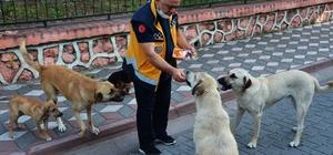 Sokak hayvanları onun gelmesini dört gözle bekliyor 112 personelinden örnek hayvan sevgisi Manisa'nın Kırkağaç ilçesinde 112 personeli olan Mehmet Akif Çelik hayvan sevgisiyle örnek oluyor Her gün mesaisine sokak hayvanlarını besleyerek başlayan Çelik, işine de sokak hayvanlarının eşliğinde gidiyor