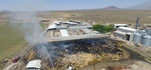 Niğde'de çiftlik yangınında 5 milyonluk zarar İnek çiftliğindeki yangın havadan görüntülendi