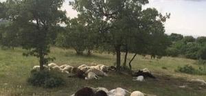 Dursunbey'de yıldırım 16 hayvanı telef etti