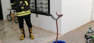 Fethiye'de itfaiyeden yılan yakalama operasyonu