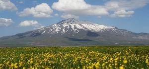 (Özel) Çiçeklerle renklenen Sütey Yaylası ve Süphan Dağı'nın manzarası hayran bırakıyor