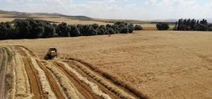 Türkiye'de ilk kez Kırıkkale'de uygulamaya konuldu: Çiftçilere özel MOBEK projesi Kırıkkale'de 'mobil tarım' uygulaması tanıtıldı Hububat hasat sezonu başladı