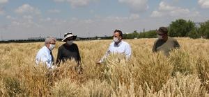Konya Gıda ve Tarım Üniversitesinin geliştirdiği milli tohumlar toprakla buluşacak