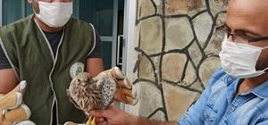 Van'da, yaralı kuşlar tedavi altına alındı