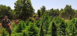 Diyarbakır'da dev uyuşturucu operasyonu: Tam 858 ton esrara denk geliyor Diyabakır ilçelerinde 28 milyon 625 bin 310 kök kenevir bitkisi ile 3 ton esrar ele geçirildi