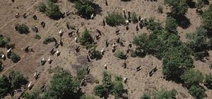 Jandarma sahibinin uyuyup kaybettiği 93 keçiyi drone ile buldu