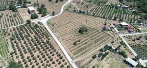 Buca Belediyesinin gurur mahsulü Buca'nın tarım reformunda ilk mahsul mutfağa girdi