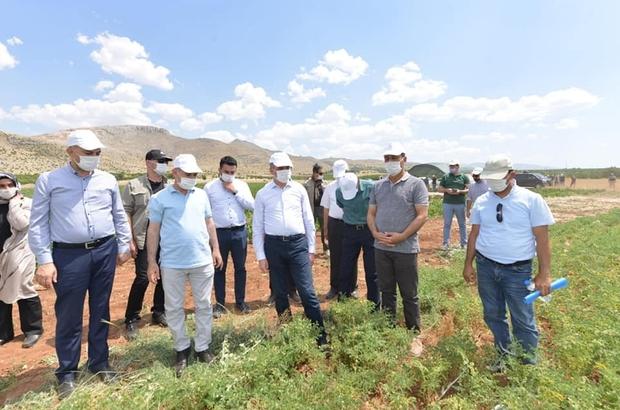 Yeşilyurt Belediyesi'nin tarımsal üretimi beğenildi