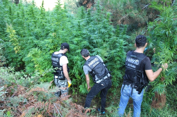 Aydın'da uyuşturucu operasyonu, narkotik ekipleri zehirletmedi