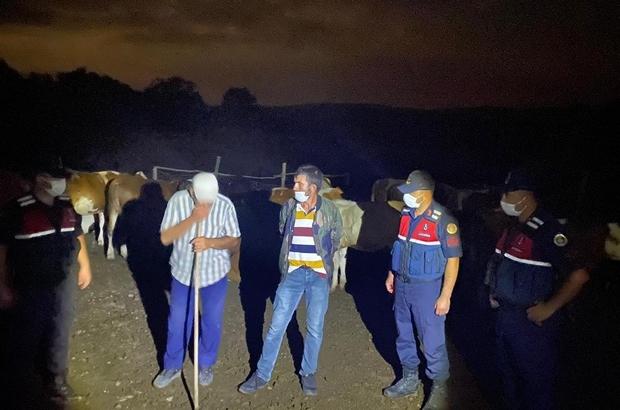 Kaybolan 10 büyükbaş jandarma tarafından bulundu