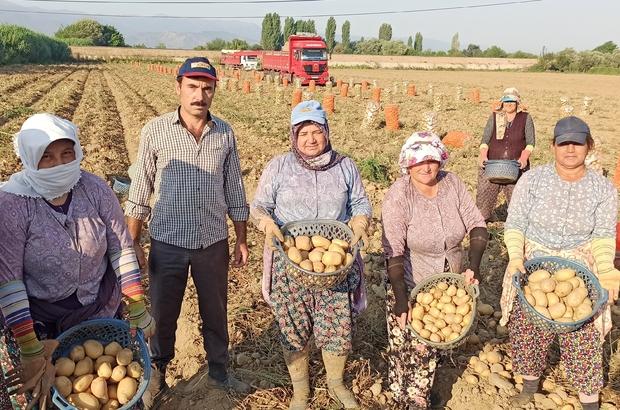 Tarım işçileri korona virüse ve sıcağa rağmen yoğun mesaide Ödemiş'te tarım işçileri durmaksızın üretim yapıyor