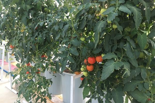Topraksız tarımı teknoloji ile buluşturdular Gençlere tarım sevgisi aşılanıyor