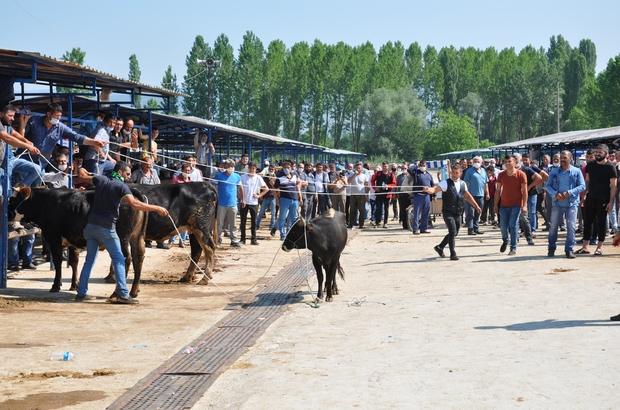 Kurban pazarında hareketli anlar yaşandı Simav hayvan pazarında sahibinin elinden kaçan boğa, vatandaşlara korkulu anlar yaşattı