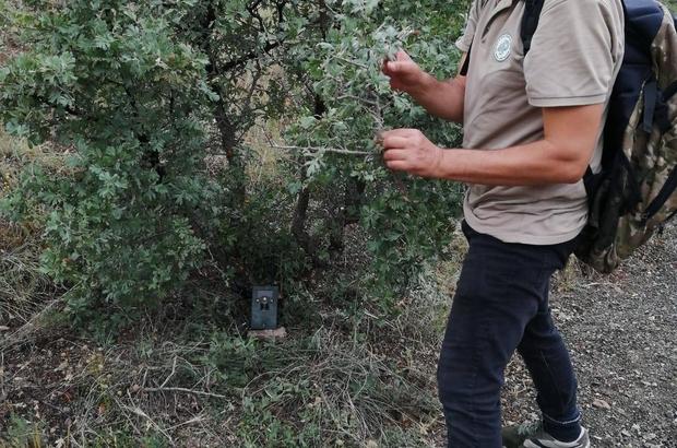 Kaçak avcılığa fotokapanlı çözüm Sivas'ta kaçak avcılığın önlenmesi için doğaya fotokapanlar yerleştirildi