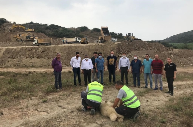 Ceyhan OSB'de ilk fabrika heyecanı Beton firması tarafından yapılacak ilk fabrika için arsa tesviye ve dolgu çalışmalarına başlandı