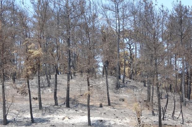 Gelibolu'yu yangından sonra ikinci tehlike bekliyor... Kumköy ve Yalova köylerinde dereler temizlenmezse sel felaketi yaşanabilir Kışın bol yağış alan Ilgardere'de dereler temizlenmezse, yanan bitki örtüsünden dolayı köyleri sel basma tehlikesi oluşabilir Gelibolu'da köylüler yaralarını sarmaya çalışıyor