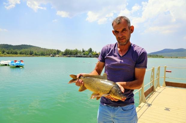Sazanların boyu 50 santimetreye ulaştı 2018 yılında Muğla Büyükşehir Belediyesi tarafından Ula Gölet'ine bırakılan pullu sazan yavruları ortalama 50 cm uzunluğuna ulaştı.