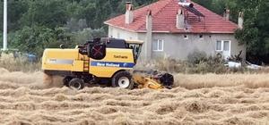 Kavaklıdere'de organik buğday hasadı başladı Kavaklıdere Belediye Başkanlığınca bölgede ilk defa 20 dönüme ekimi yapılan organik siyez tam buğday hasadı başladı.