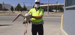 Yaralı leyleğe polisten şefkat eli