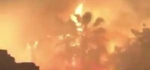 İzmir'de ot yangını paniğe sebep oldu