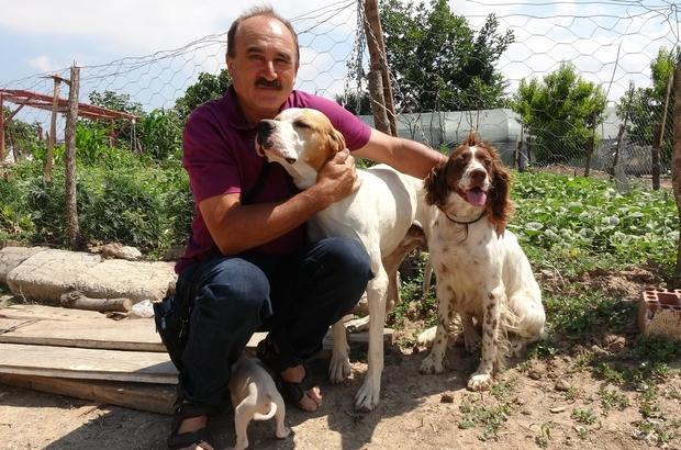Çanakkale'de köpeklere eziyet iddiası asılsız çıktı İnsan ve hayvan dostu emekli öğretmen sosyal medya kurbanı oldu