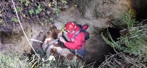 Çukura düşen ineği AKUT ekipleri kurtardı