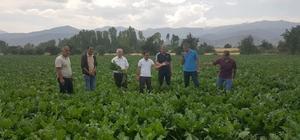 Müdür Görentaş, şeker pancarı üretim alanlarını gezdi